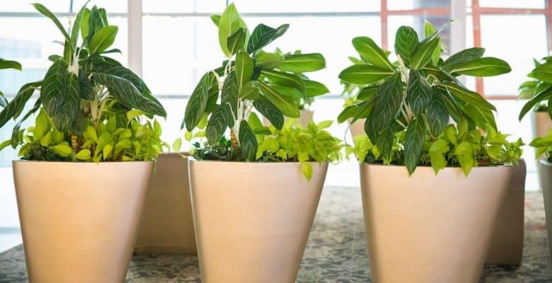 potted plants 1